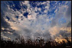 Altro tramonto nel mais
