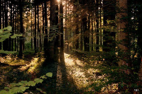 Altweibersommer im Schwarzwald