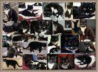 Alyosha - Stationen eines Katzenlebens