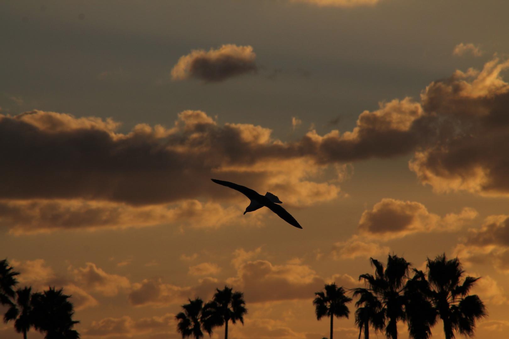 Am Abend auf Coronado Island