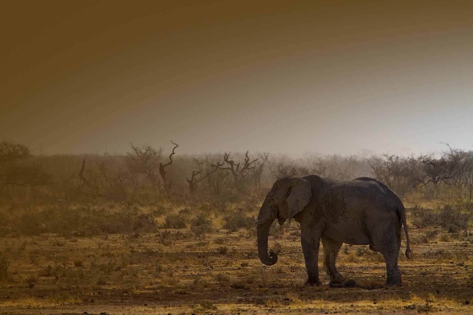 am Abend im Etosha Nationalpark