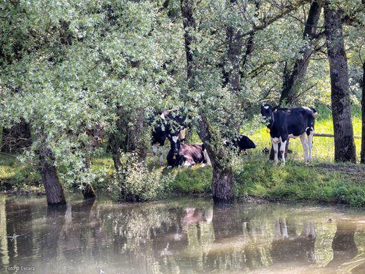 Am Altenrhein