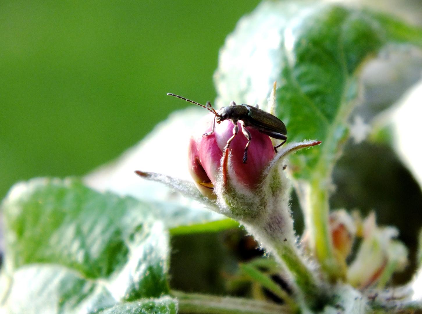 am apfelbaum foto bild tiere wildlife insekten. Black Bedroom Furniture Sets. Home Design Ideas