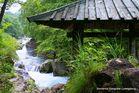 Am Bach von Nikko, Japan
