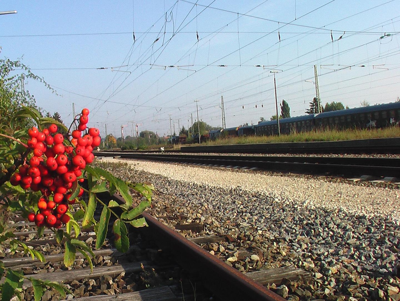 Am Bahngleis2