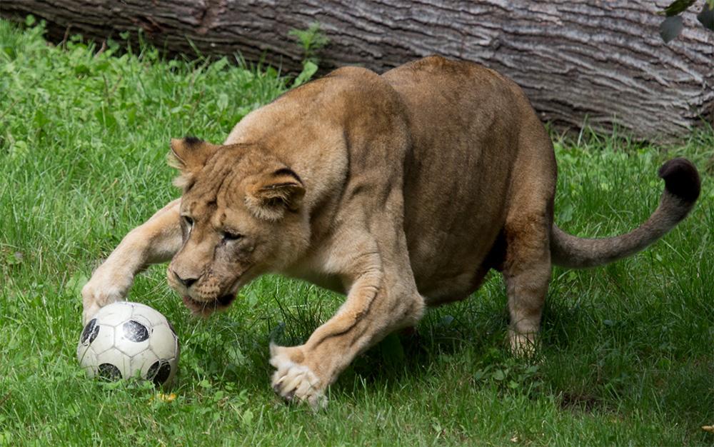 Am Ball bleiben, Fit bleiben