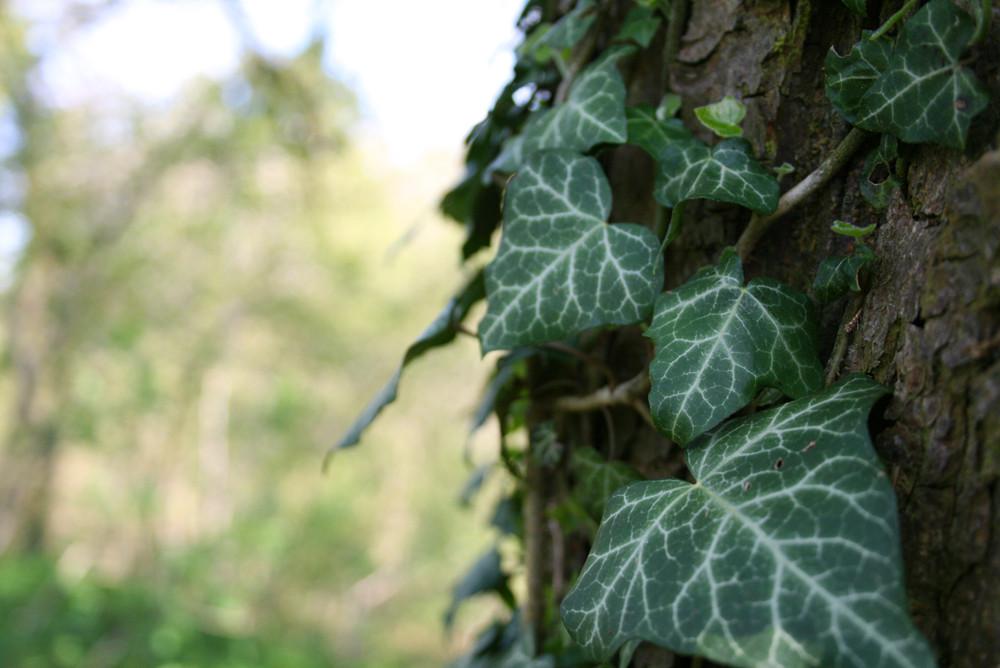 Am Baum entlang