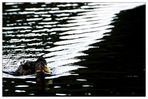 Am Beispiel einer Ente - Das Licht hat viel mehr Wellen- als Teilchencharakter