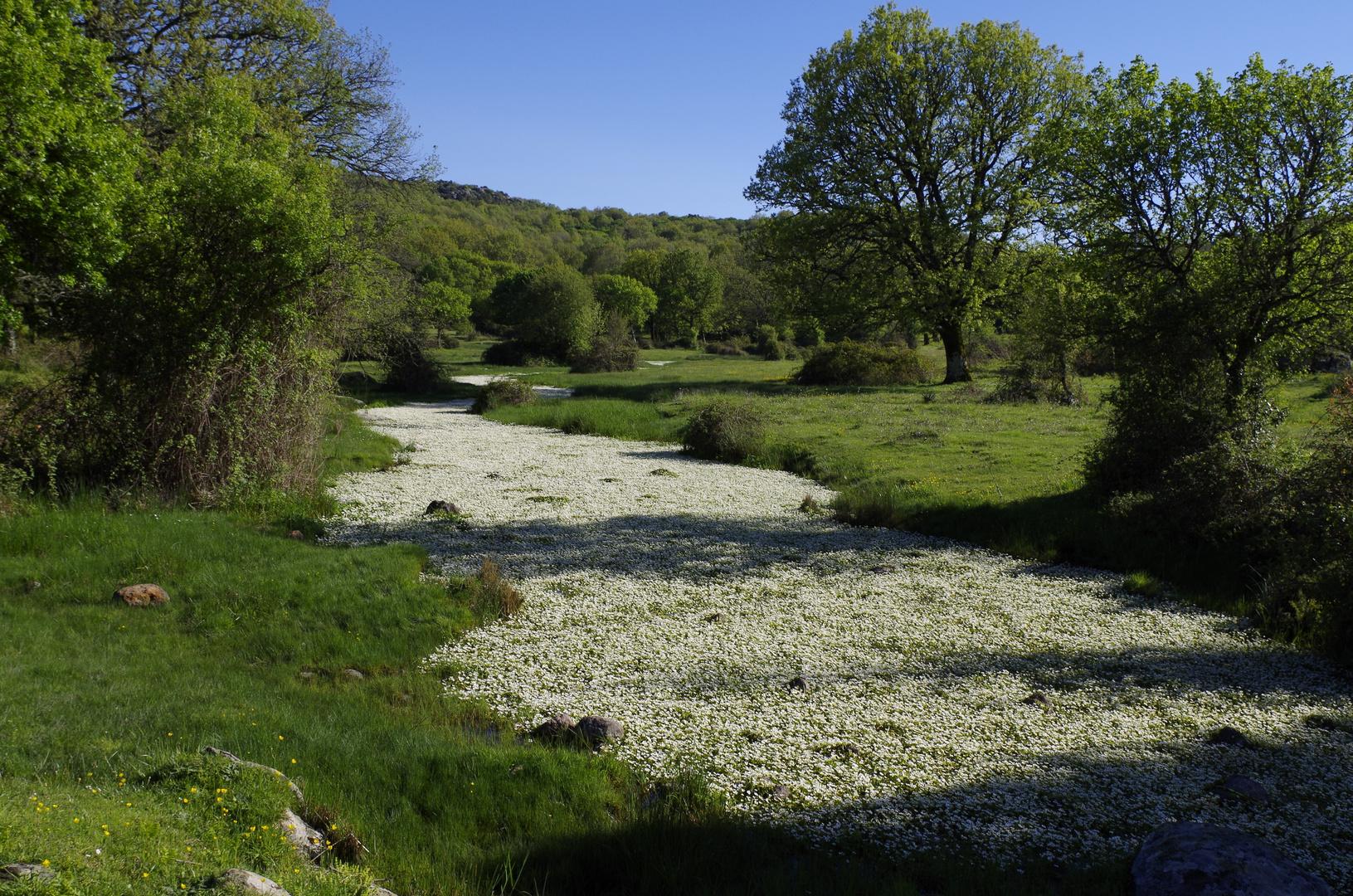 am blumenfluss- fiume di fiori