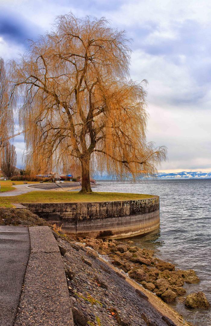am Bodensee