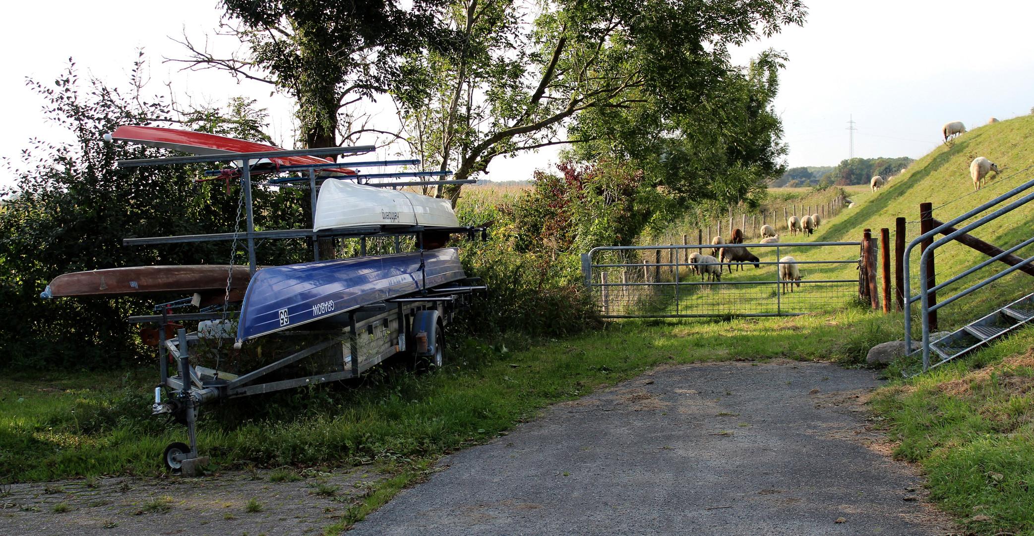 am Bootshaus am Ostedeich da laufen auch Schafe ...