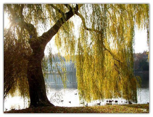 Am Burgsee in Bad Salzungen
