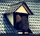 Am Dach