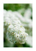 Am Ende des Frühling