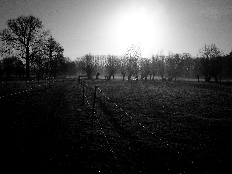 Am Feld