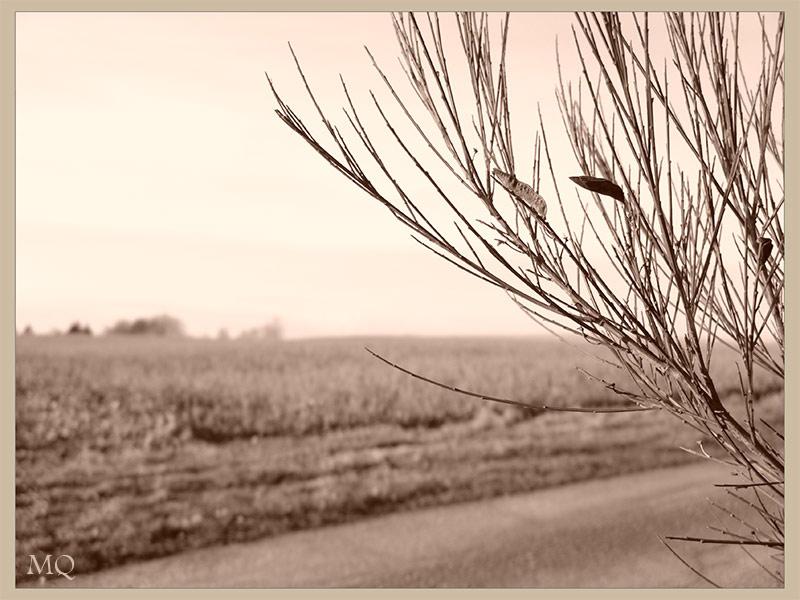 Am Feldweg