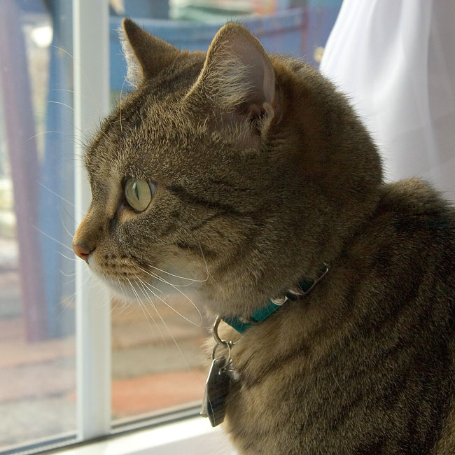 Am Fenster ...