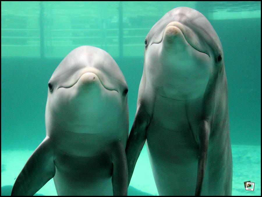 Am Fotografen sehr interessierte Delfine im Duisburger Zoo