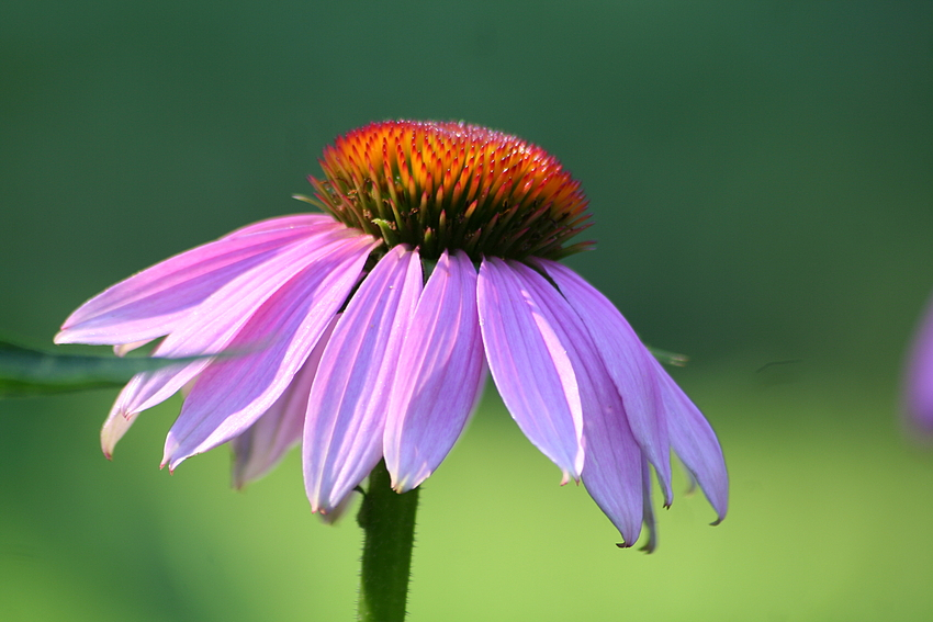 Am frühen Morgen in der Flora