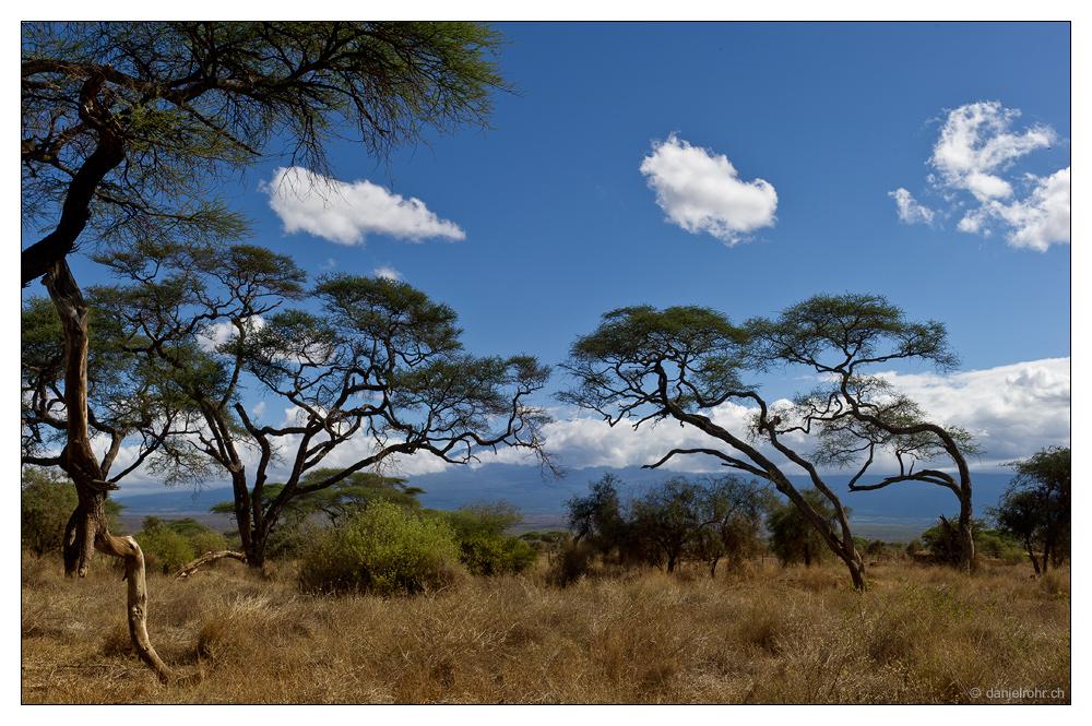 Am Fusse des Kilimanjaro