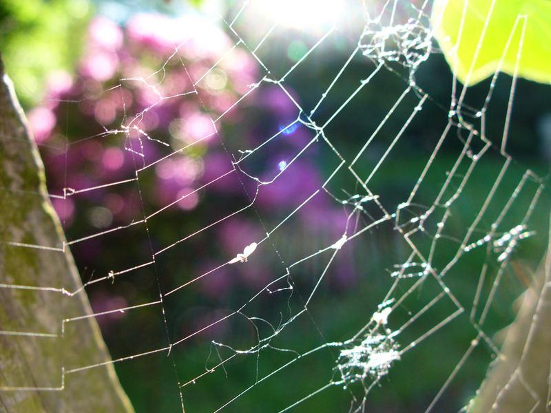 Am Gartenzaun