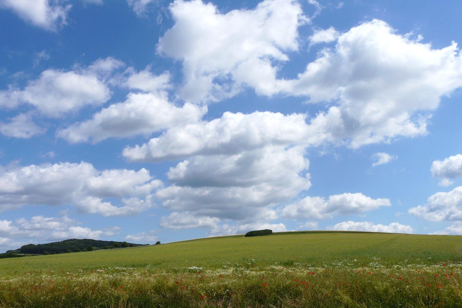 Am Getreidefeld bei Edesheim