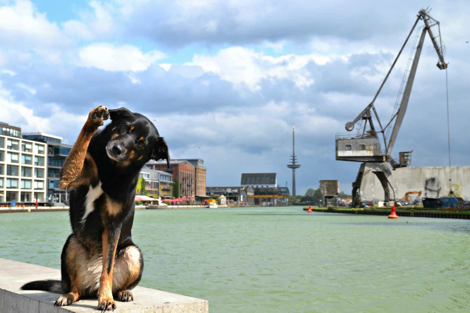 am Hafen in Münster