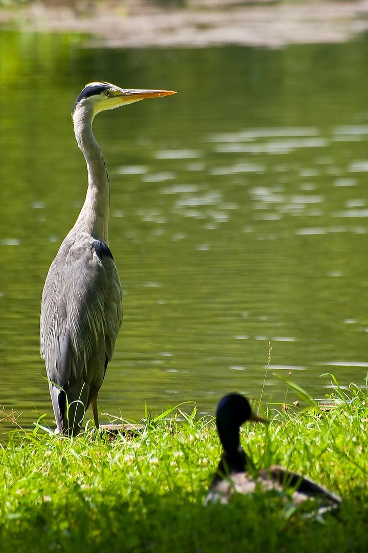 Am Heimatsee
