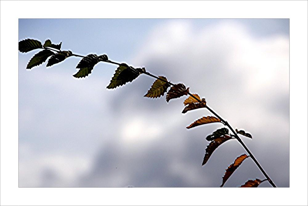 Am Herbstwind