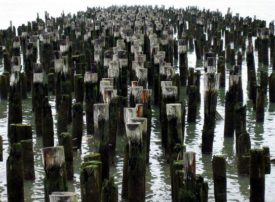 Am Hudson. NYC 2007