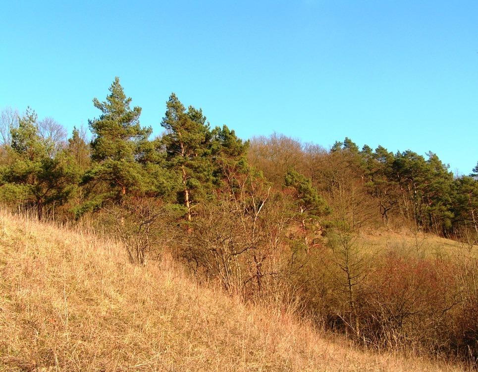 Am Karlswald