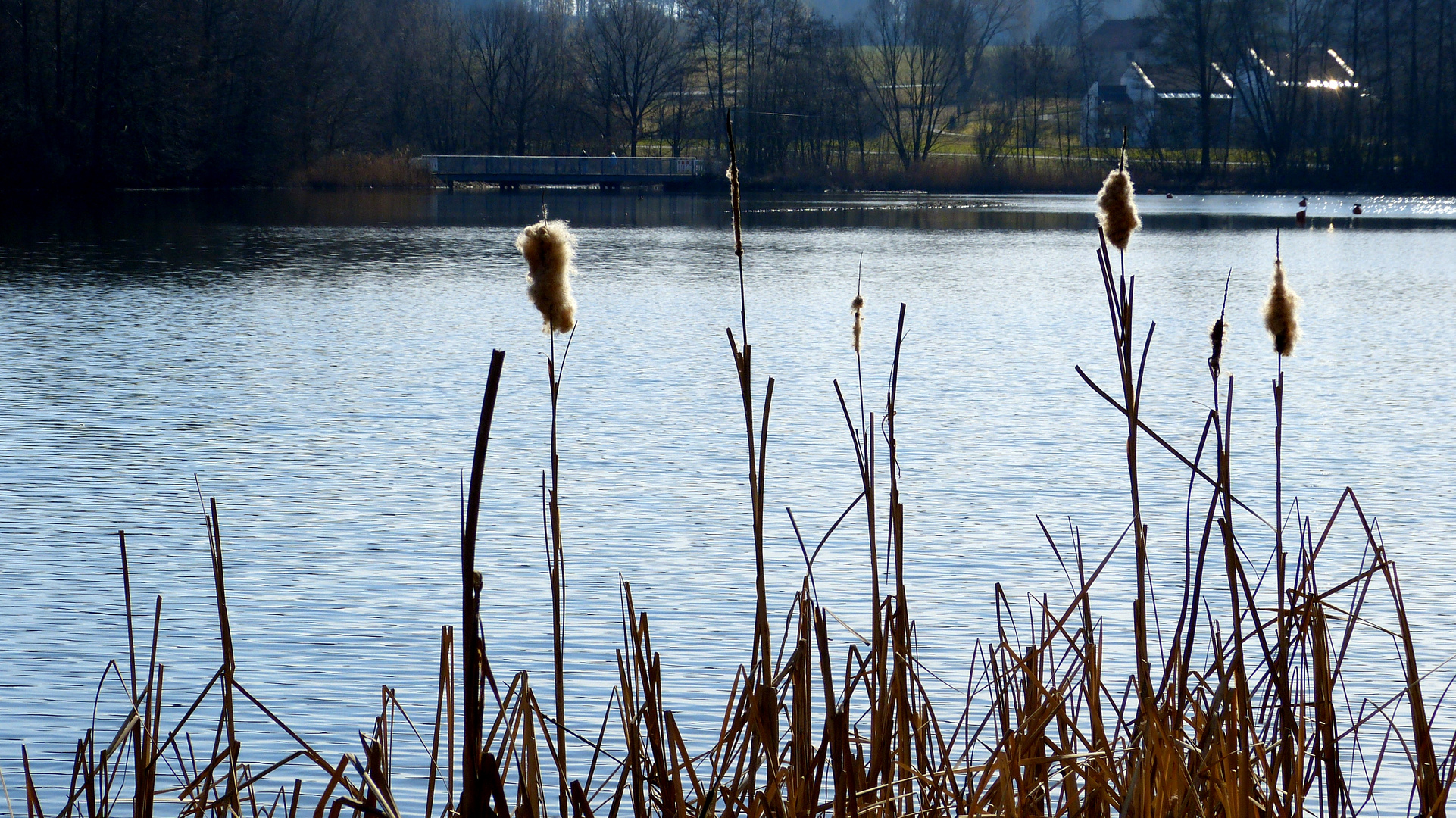 am kleinen Rothsee 1