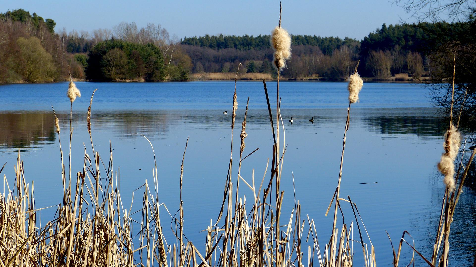 am kleinen Rothsee 2