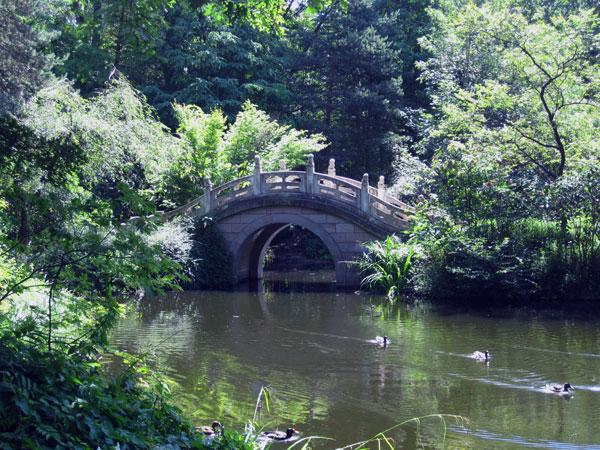 Am kleinen Teich....