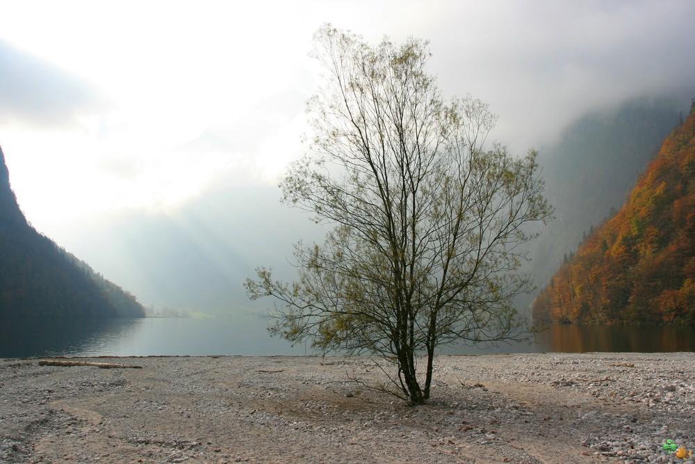 Am Königssee...