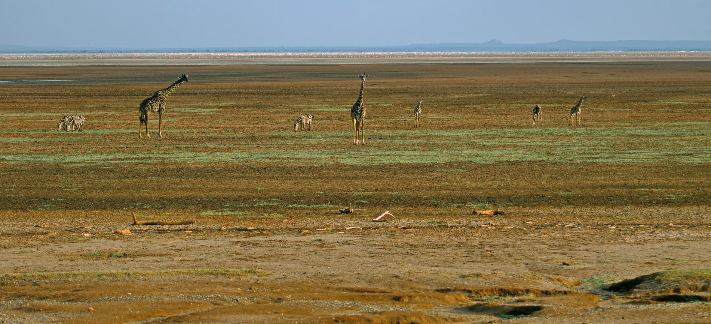 Am Lake Manyara