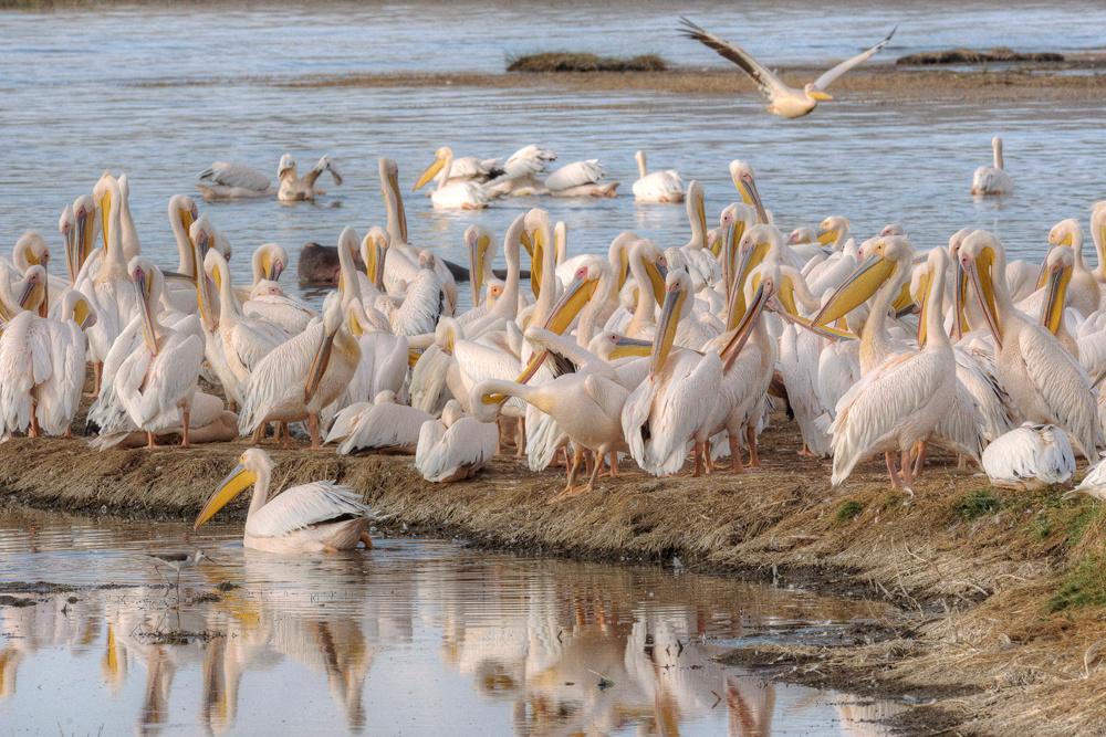 Am Lake Nakuru