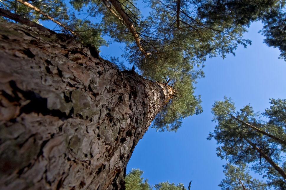 am liebsten runtersetzen und in den Wald lauschen..
