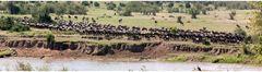 Am Mara River - Serengeti Nord