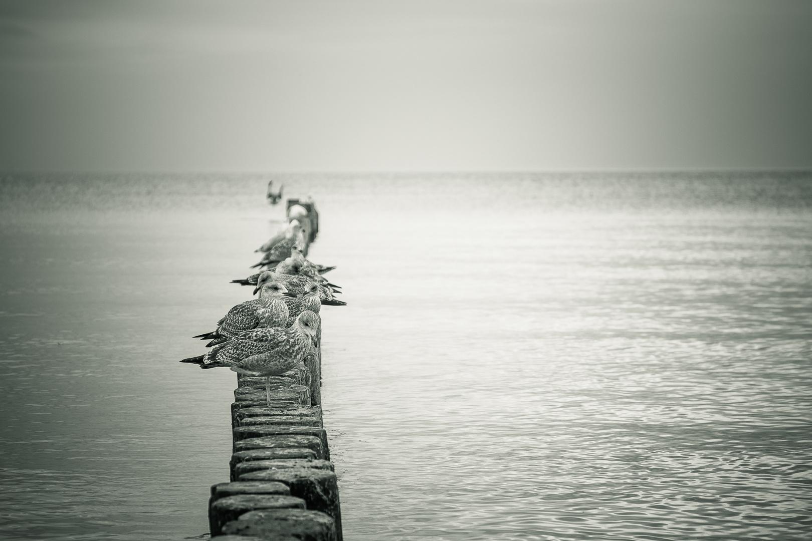 am Meer V Schwarz Weiss
