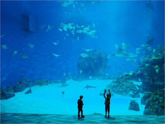 Am Meeresboden