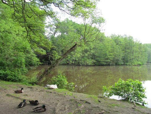 am Meyenburger Wassermühle  - Teich ....