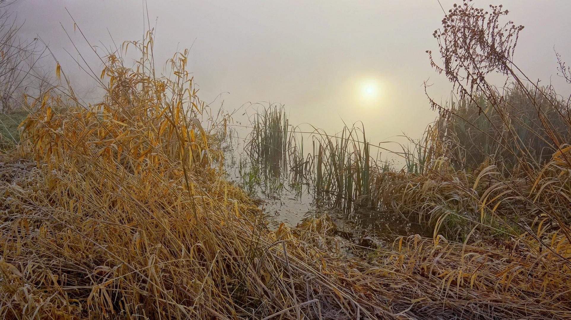 Am Morgen am See (por la mañana en el lago)