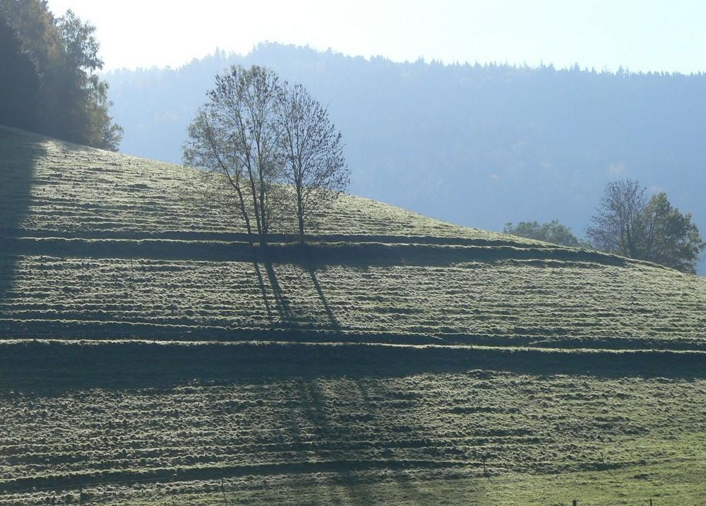 am Morgen bei Buchenbach