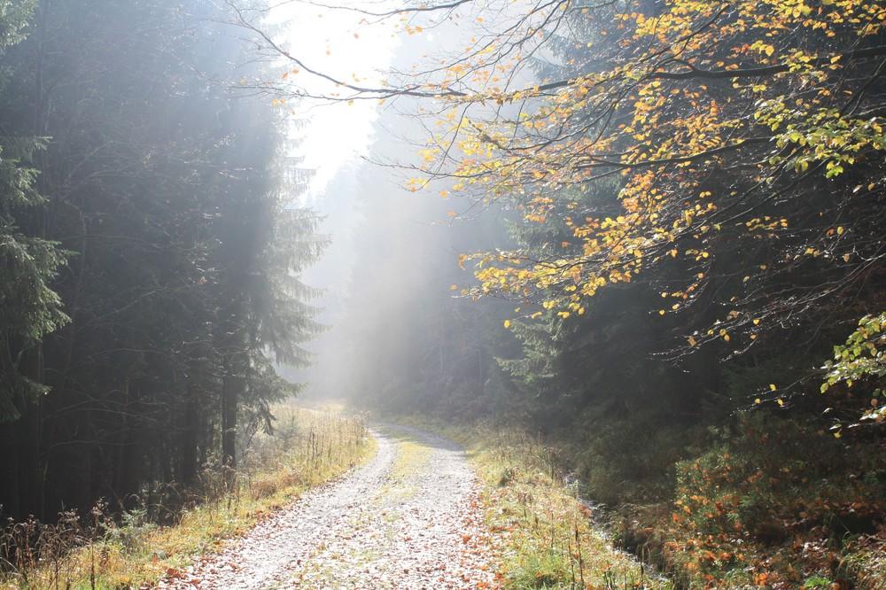 am Morgen im Harz