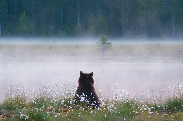 Am Nebel See