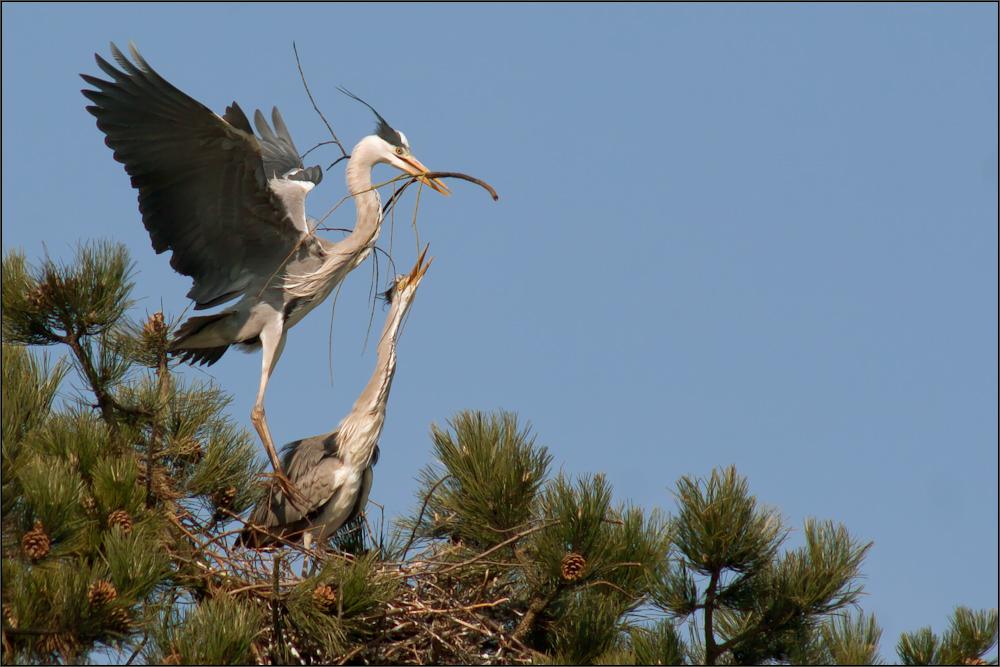 Am Nest,,,