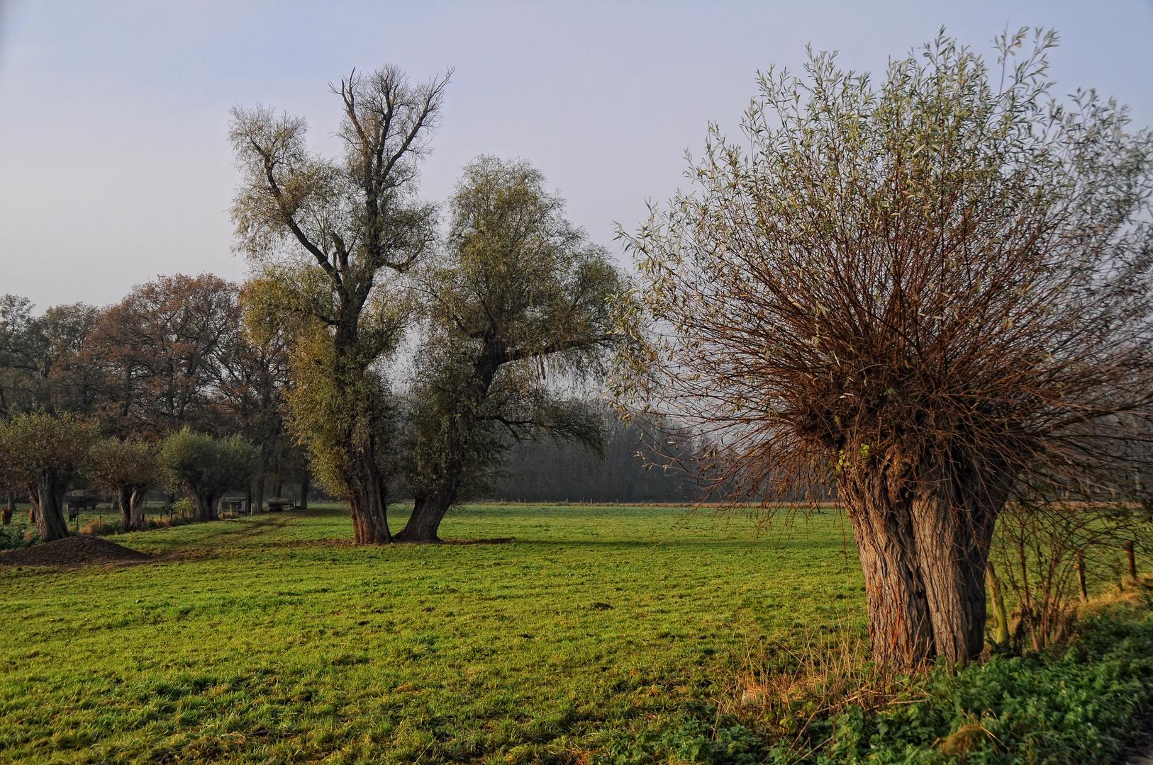 Am Niederrhein 12.11.2011