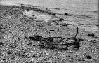 Am Niederrhein # 251 ( Strandgut ) von Reinhold Jansen