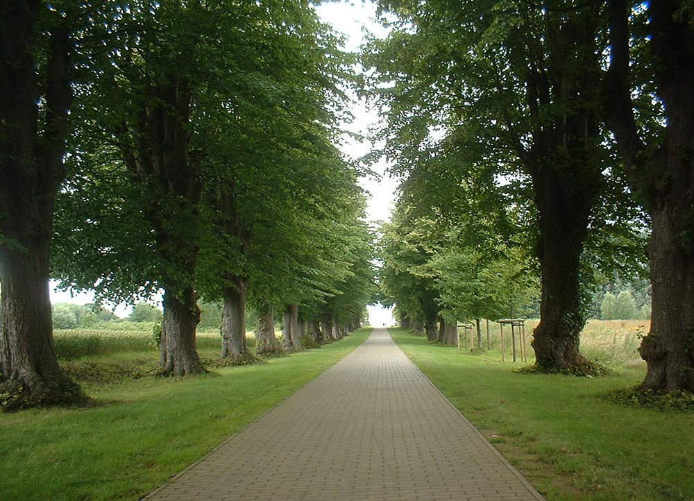 ~ Am Ostsee-Radweg ~